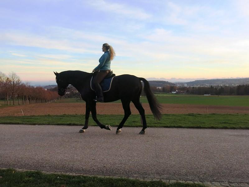 Rider in Feldbrunnen