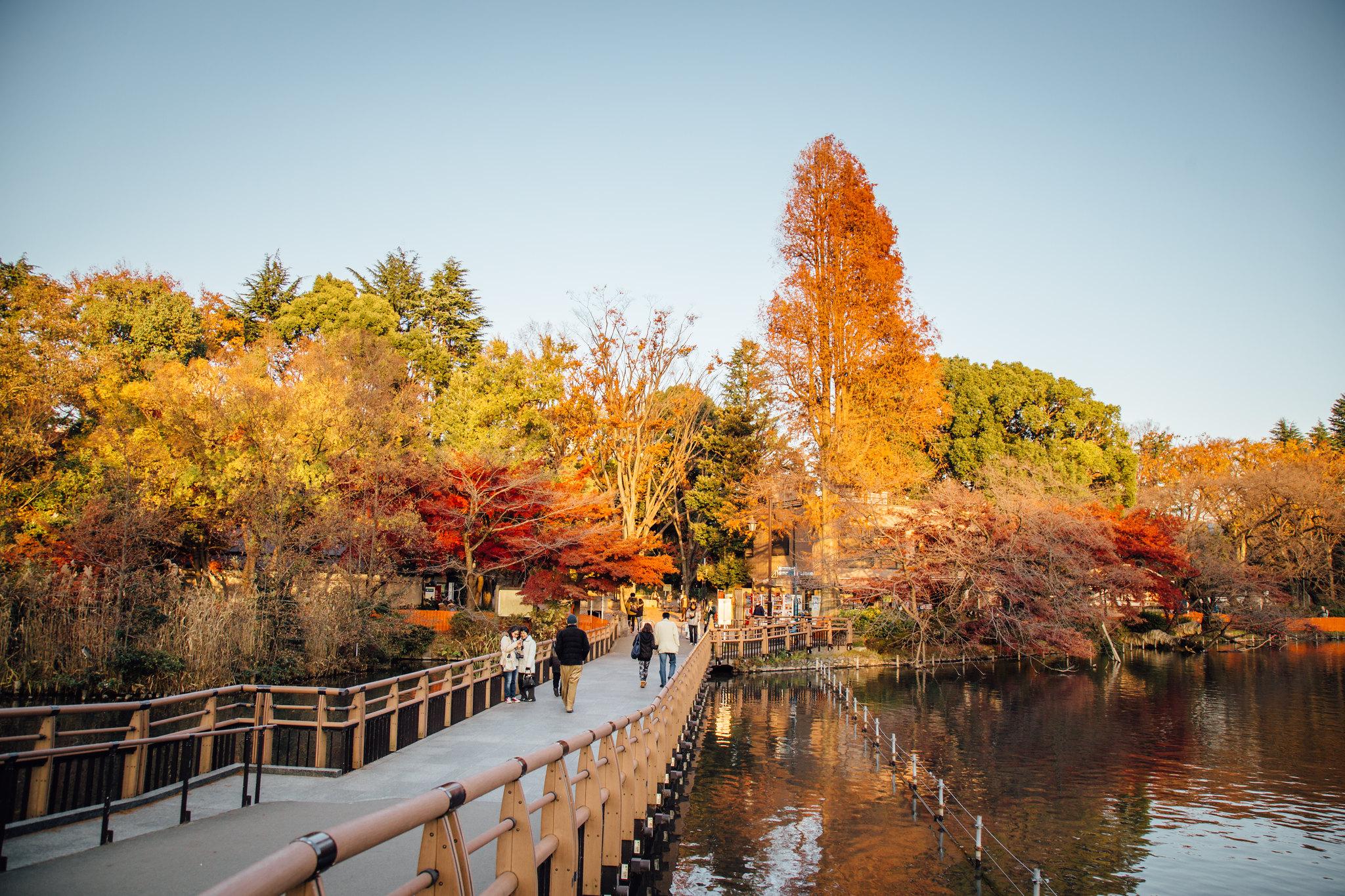 2015-12-08 井の頭公園 001-8