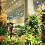 Orchideengarten im Changi Airport Singapur (3)