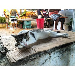 A gata e o Mercadão; a base de coluna para futura coberta e o descanso de sábado.