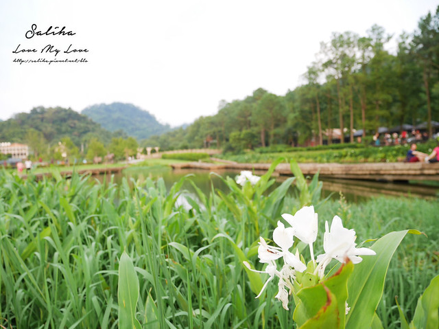 桃園一日遊景點大溪慈湖公園 (17)