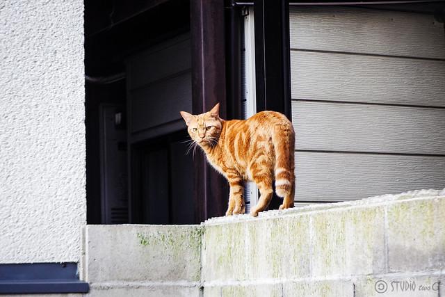 Today's Cat@2015-09-29