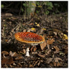 Amanita muscaria by Harry -[ The Travel ]- Marmot
