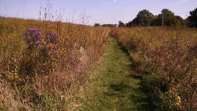Prairie path in fall
