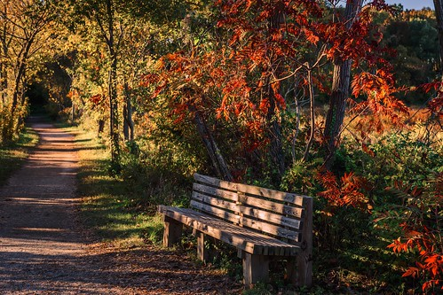Happy Bench Monday: Autumn in Dykes Marsh by Geoff Livingston