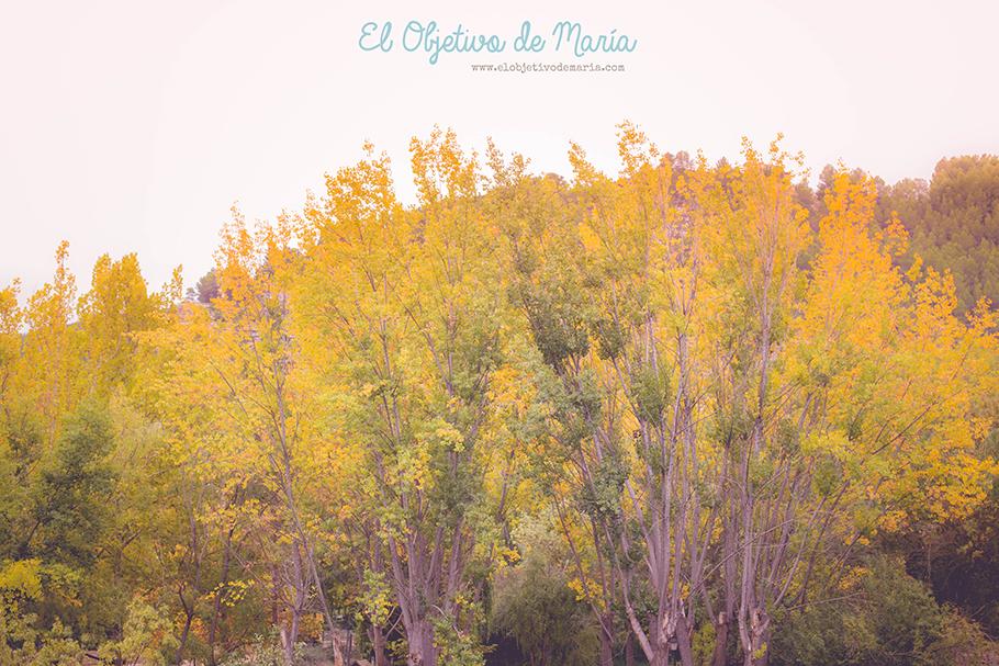El otoño y sus ocres
