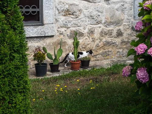 montenegro животные цветы архитектура кошки черногория kolašin