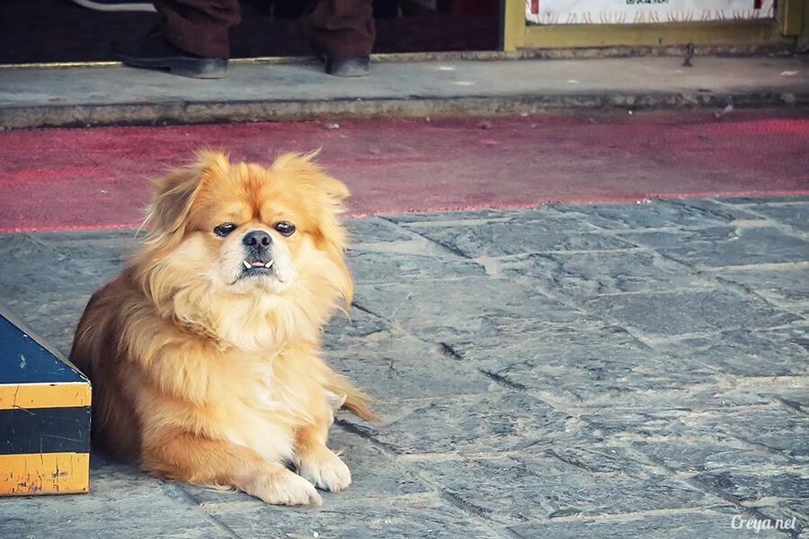 2015.12.09 ▐ Tibet 西藏踢北去 ▐ 尋找藏人真正的拉薩中心,被信仰力量震撼的大昭寺與舊城區 02.jpg
