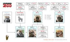 Gorilla Family - Givskud 2016