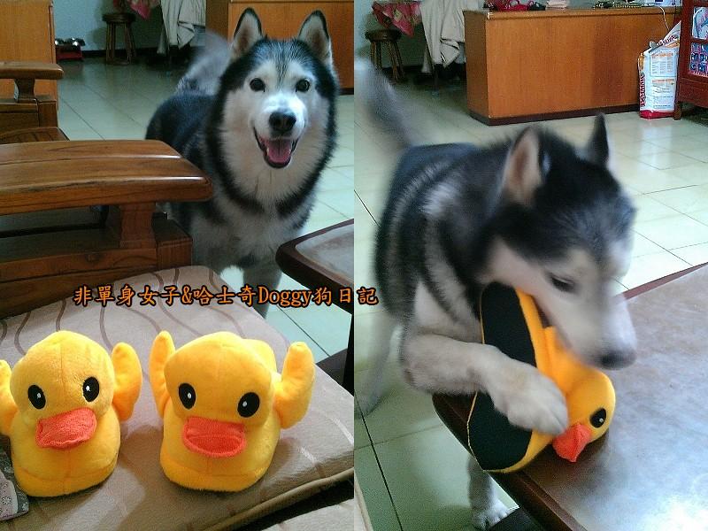 doggy黃色小鴨鞋01
