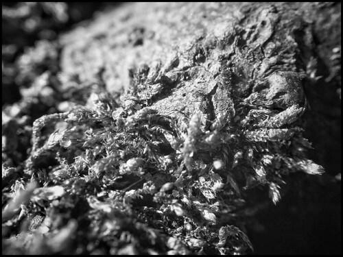 Moss and Bark -BW  2/52