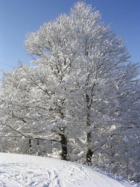 verschneite Bäume, Nikon E3200