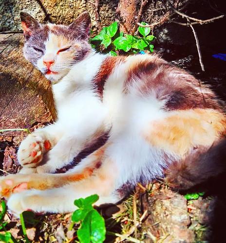 A new #week comes... #catsofinstagram #eyeemoninstagram #excellent_nature #excellent_cats #gattissimi #fusagattini #yourartgallery  #viewbug #il_fotografo_magazine #fotografoitaliano #asuszenfonego #igattipiubellialmondo #gattiitaliani #repostcalabria #li