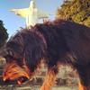 Joe com cristo :thumbsup::smile: #cristo #serranegra #saopaulo #viralata #dog #cachorro