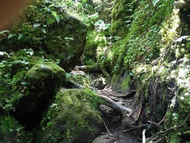 焼岳 中尾温泉ルート 苔の登山道