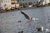 Feeding birds by andrea.prave