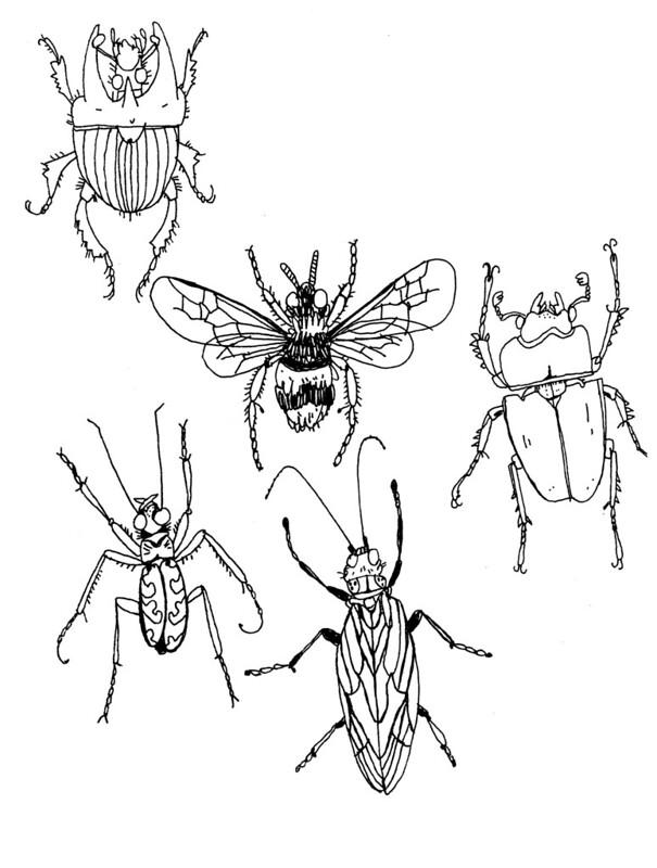 insekter och skalbaggar