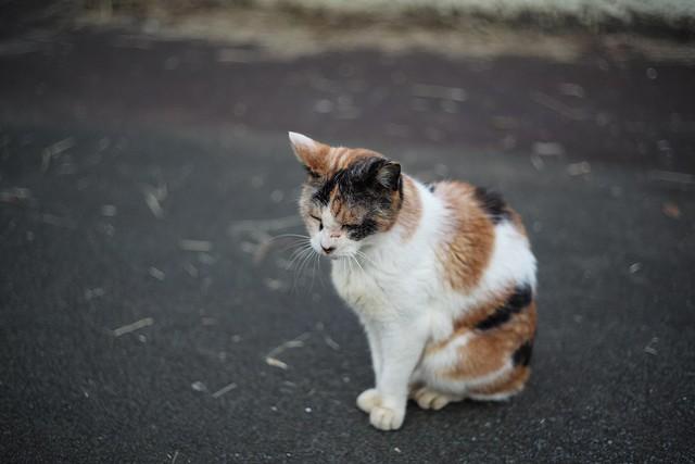 Lean cat