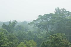 Haze blankets Singapore's Green Corridor