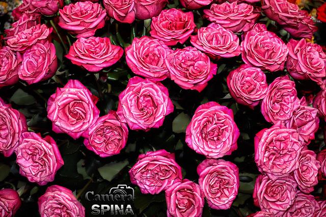 Flor 035