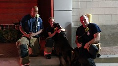 Dogs Rescued at Apartment Fire