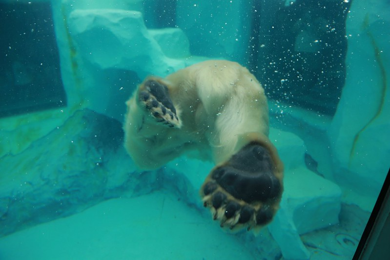 水底的北極熊