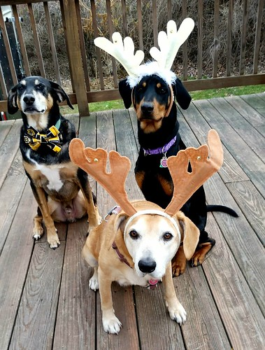 2 Hounds and a Doberman Mix #AdoptDon't Shop - Lapdog Creations
