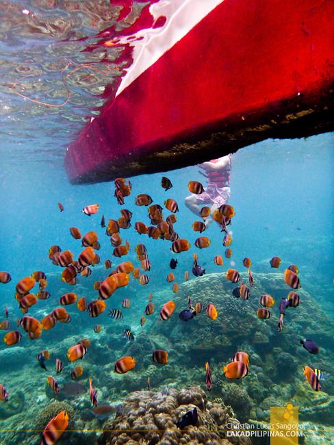 Boracay Island Hopping Snorkeling