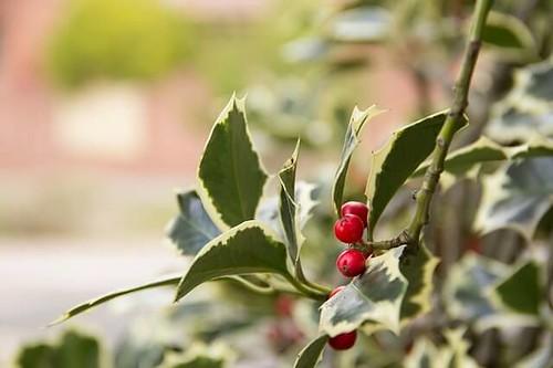 12月 by pixabay