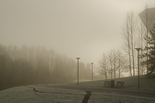 Misty Morning (iv)
