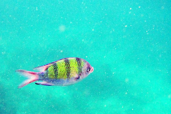snorkeling16