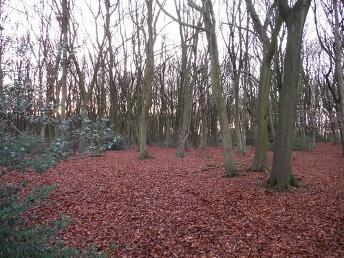 Wood near Redding's Farm