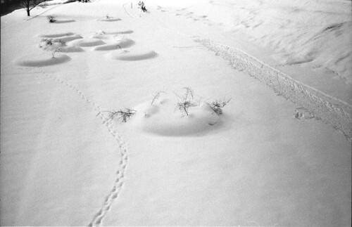 2017 film bw snow sapporo winter leitz leica leicam7 35mm 3520 summicron vs3 ilford hp5 1600 hc110 japan shootfilm buyfilmnotmegapixels