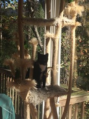 home made cat tree