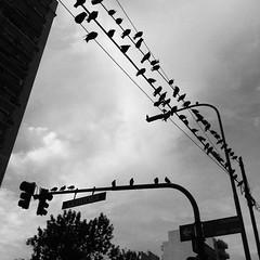 #birds #pajaros #palomas #street #calle #ciudad #city #buenosaires #igersbsas #igersarg #instacool #instagood #byn #blancoynegro #blackandwhite #semaforo #nubes #clouds