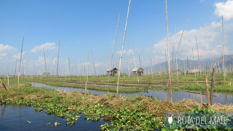 Lago Inle Myanmar (26)