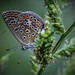 butterfly by nahid mammadov