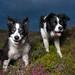 Molly and Bert(zilla) by svensl
