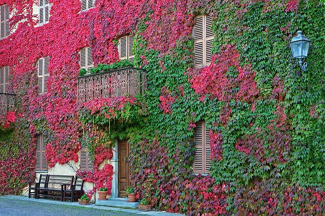 I colori  dell'autunno a Bossolasco