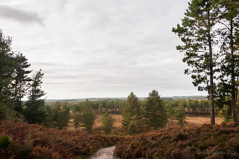 View across Wareham Forest from Great Ovens Hill