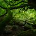 Green forest by bertigarcas
