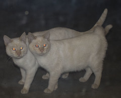 kitties_2