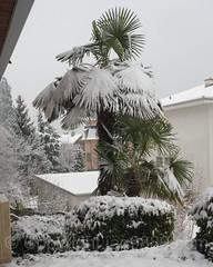 Eden Park Palm Tree, Weggis, Switzerland