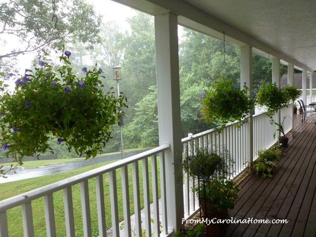 Rainy Garden Day 9