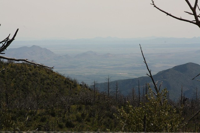 Onion Saddle, Chiricahua Mountains