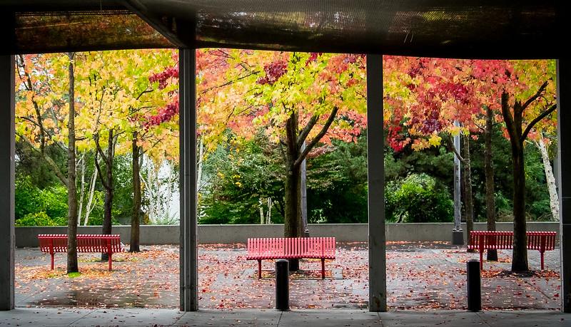 Seattle Center Color