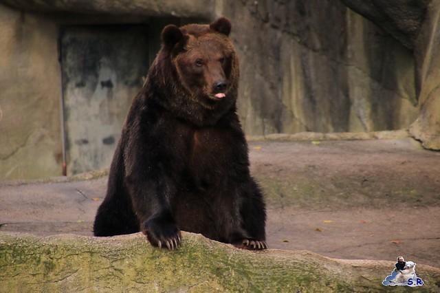 Tierpark Hagenbeck 27.09.2015 038