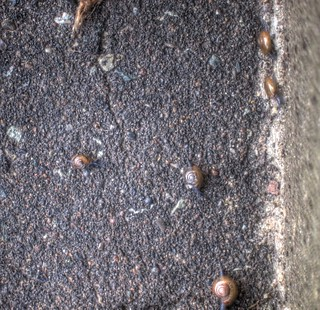 snails on SEP 27, 2015 (3)