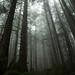 Juan de Fuca Provincial Park forest by tylerhuestis