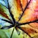 Rainbow Leaf by j.towbin ©